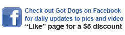 facebook-option got dogs